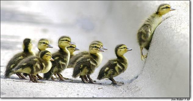 Get your ducky on...................... Quack Quack